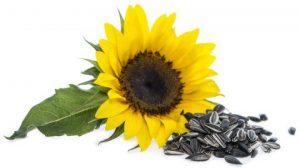 Храни с високо съдържание на витамин Е 2 | Timefortrain