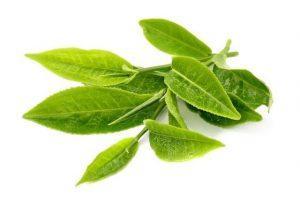 Екстракт от зелен чай - 10 ползи 1 | Timefortrain